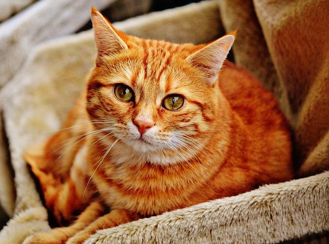 kočka v bedýnce