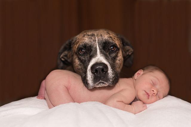 pes u miminka