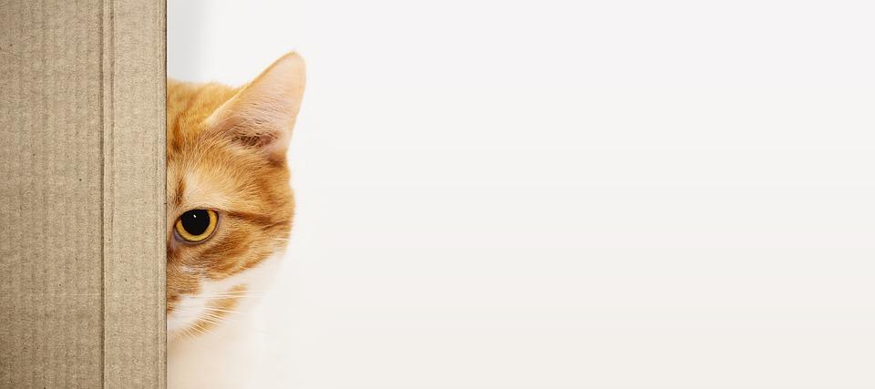 kočka za krabcí