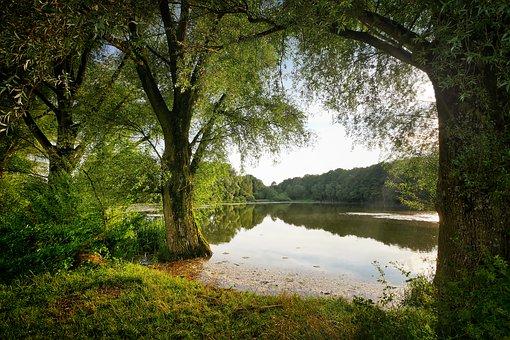 rybník les